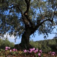 Artenvielfalt im Olivenhain